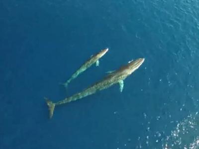 Catalunya 'whale-way café': Costa Garraf is regular feeding zone for world's second-largest mammal, say biologists
