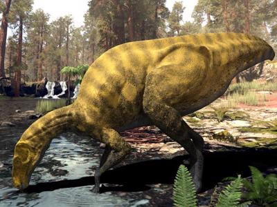 Dinosaur 'discovered' in Castellón lived 130 million years ago