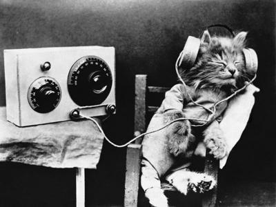 Cat's loud late-night music brings police to door