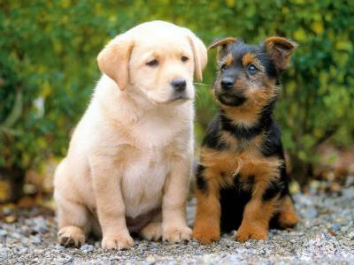 Top 10 pet dog names in Spain include Luna for girls and Toby for boys