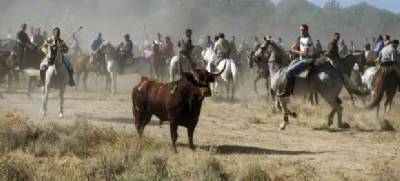 Huge celebrities offer free festival if Tordesillas bans bullfights, but mayor says no