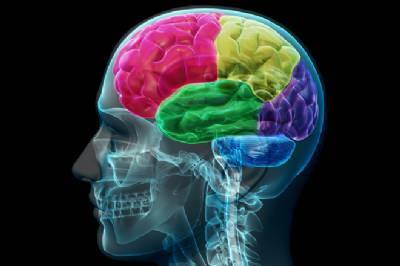 Human brain 'needs metaphors' to comprehend reality, say researchers in Alicante and Elche