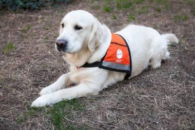 Pet dog gets full-time job as beach lifeguard