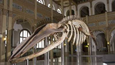 Five-million-year-old whale fossil found in Mallorca quarry