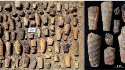 'Polar' marine fossils of 465 million years found in central Spain