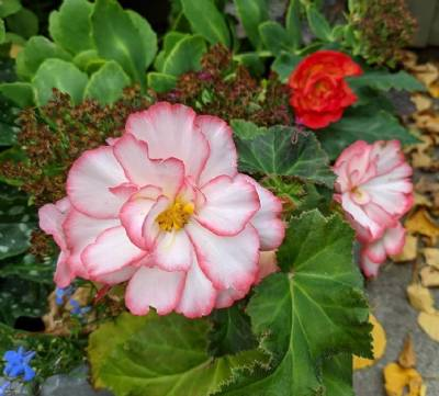 November flowers: What blossoms in Spain when the sun takes its hat off
