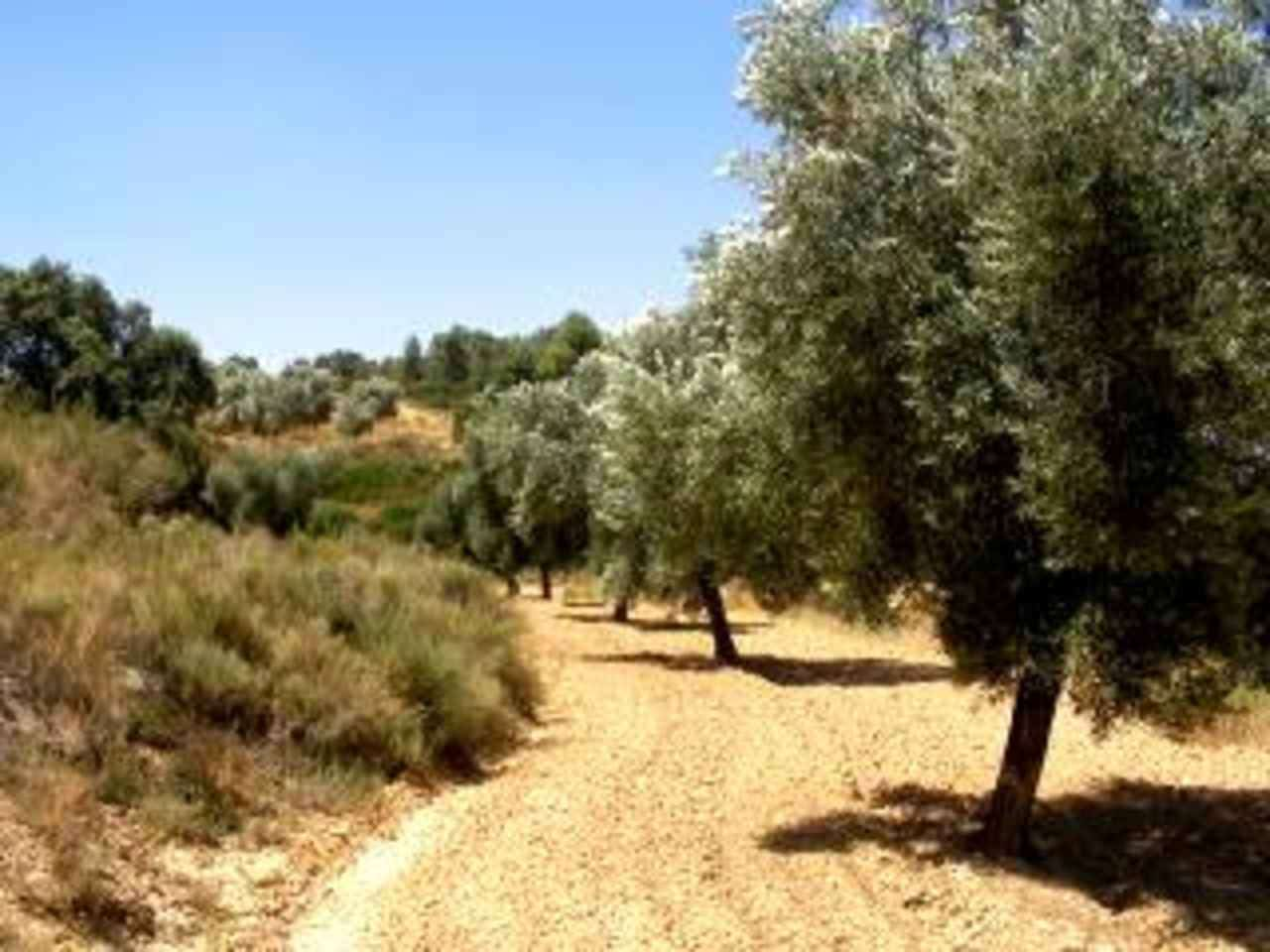 Finca/Country House for sale in Mazaleon - € 11,000 (Ref: 1240916)