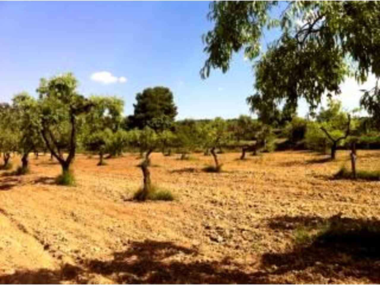 Finca/Country House for sale in Arens de Lledo - € 18,000 (Ref: 1594962)