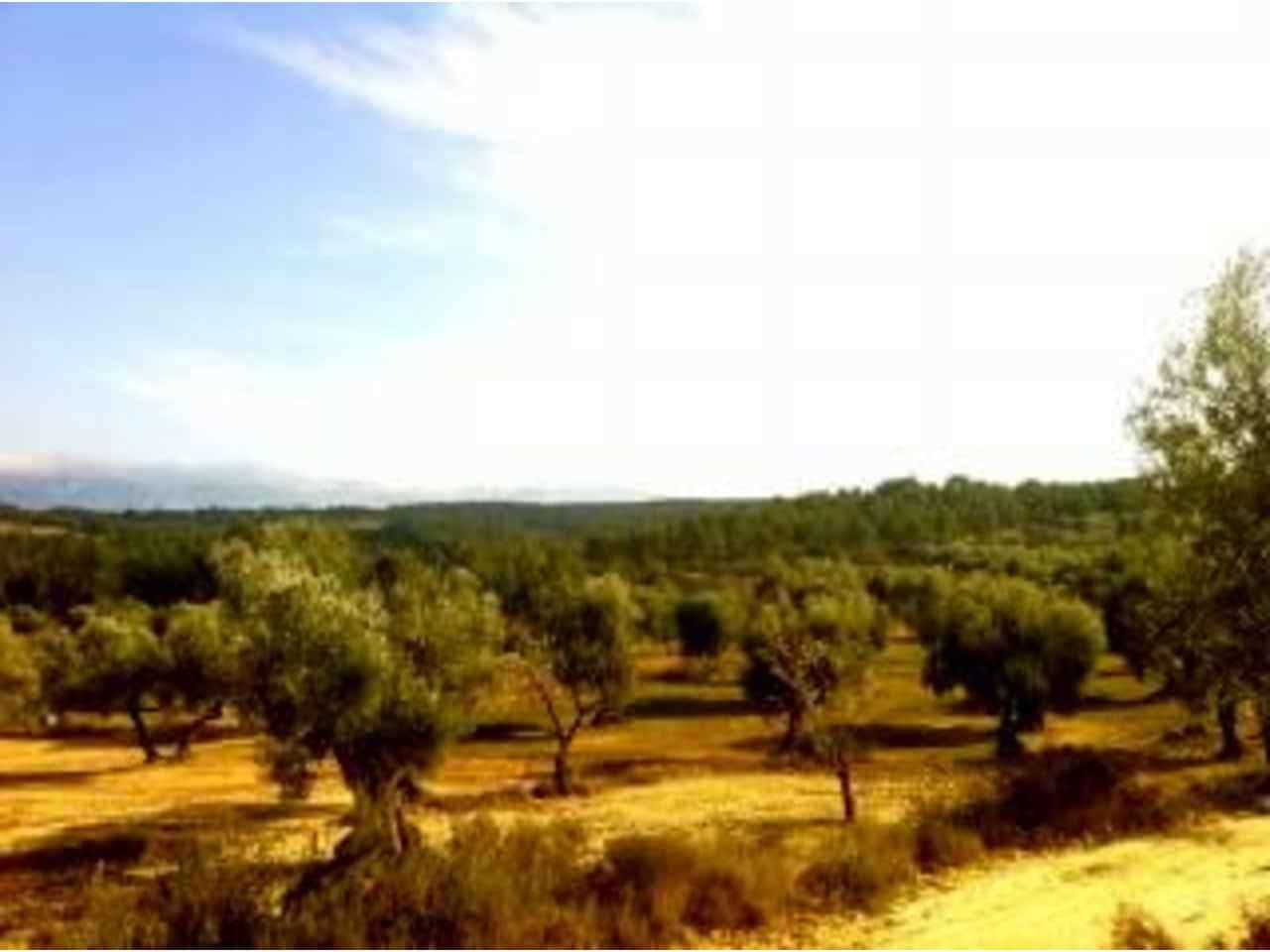 Undeveloped Land for sale in Arens de Lledo - € 28,000 (Ref: 3318821)
