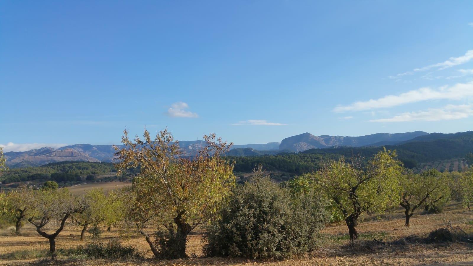 Undeveloped Land for sale in Valderrobres - € 40,000 (Ref: 4233595)