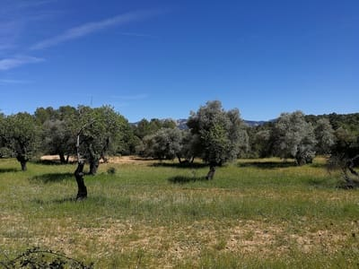 Undeveloped Land for sale in Lledo - € 50,000 (Ref: 5162205)