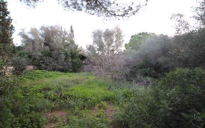 Landgrundstück zu verkaufen in Maioris Decima - 200.000 € (Ref: 5451923)