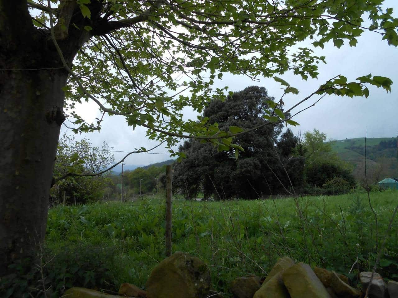 Undeveloped Land for sale in Carranza - € 85,000 (Ref: 942837)