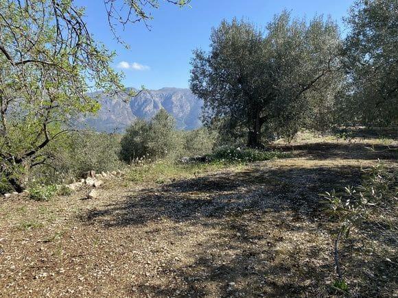 Terreno Não Urbanizado para venda em Benifato - 18 000 € (Ref: 5964691)