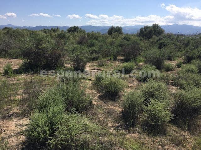 Undeveloped Land for sale in Partaloa - € 26,000 (Ref: 6055121)