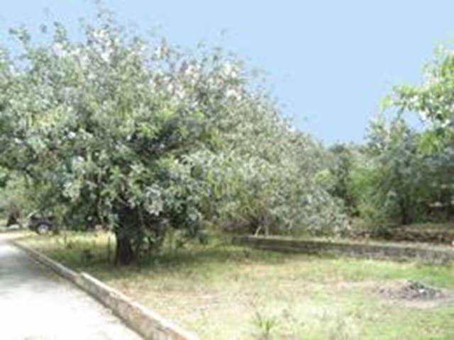 Ubebygd land til salgs i Denia - € 126 000 (Ref: 592604)