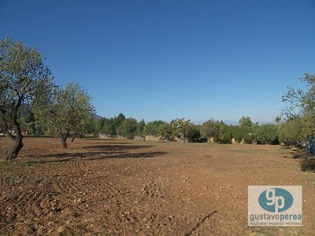 Byggegrund til leje i Alhaurin de la Torre - € 1.000 (Ref: 3610043)