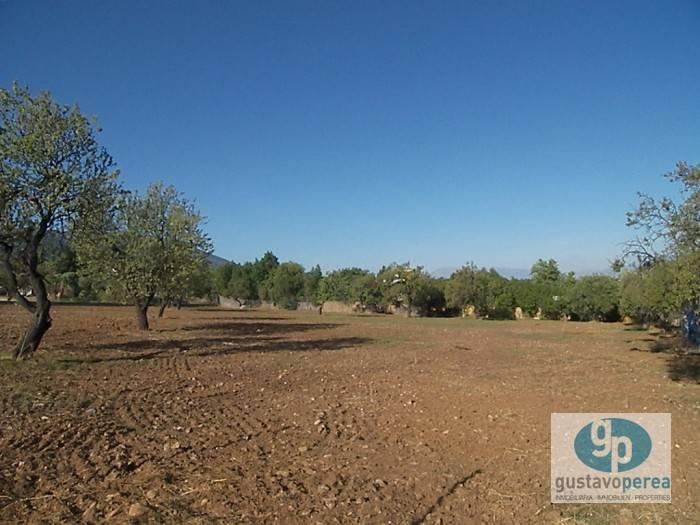 Byggetomt til leie i Alhaurin de la Torre - € 1 000 (Ref: 3610043)