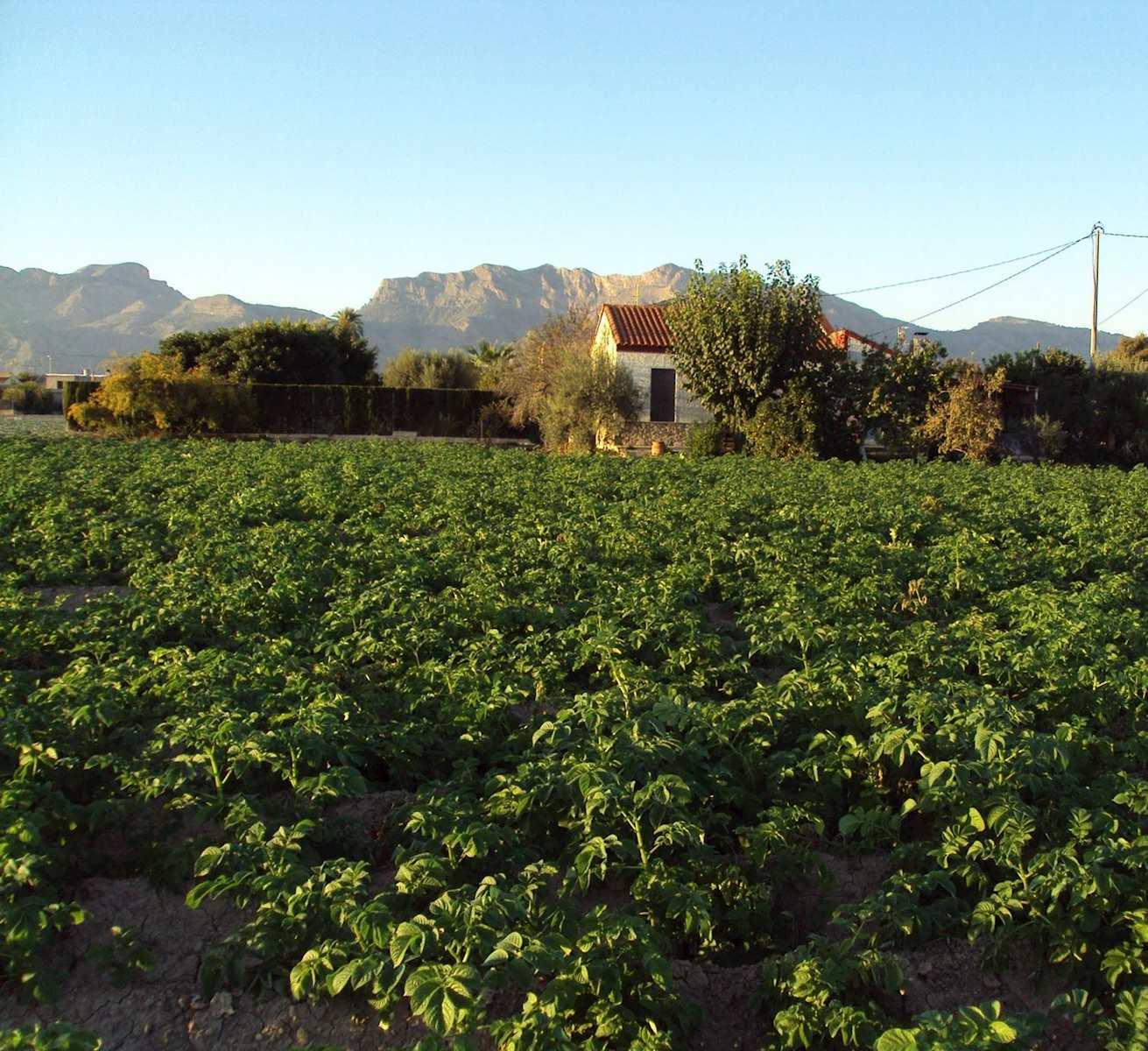 Finca/Casa Rural de 4 habitaciones en Orihuela en venta con garaje - 135.000 € (Ref: 3738398)