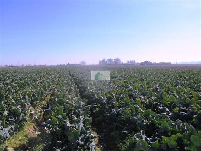 Terre non Aménagée à vendre à Valdelacalzada - 155 000 € (Ref: 4641466)
