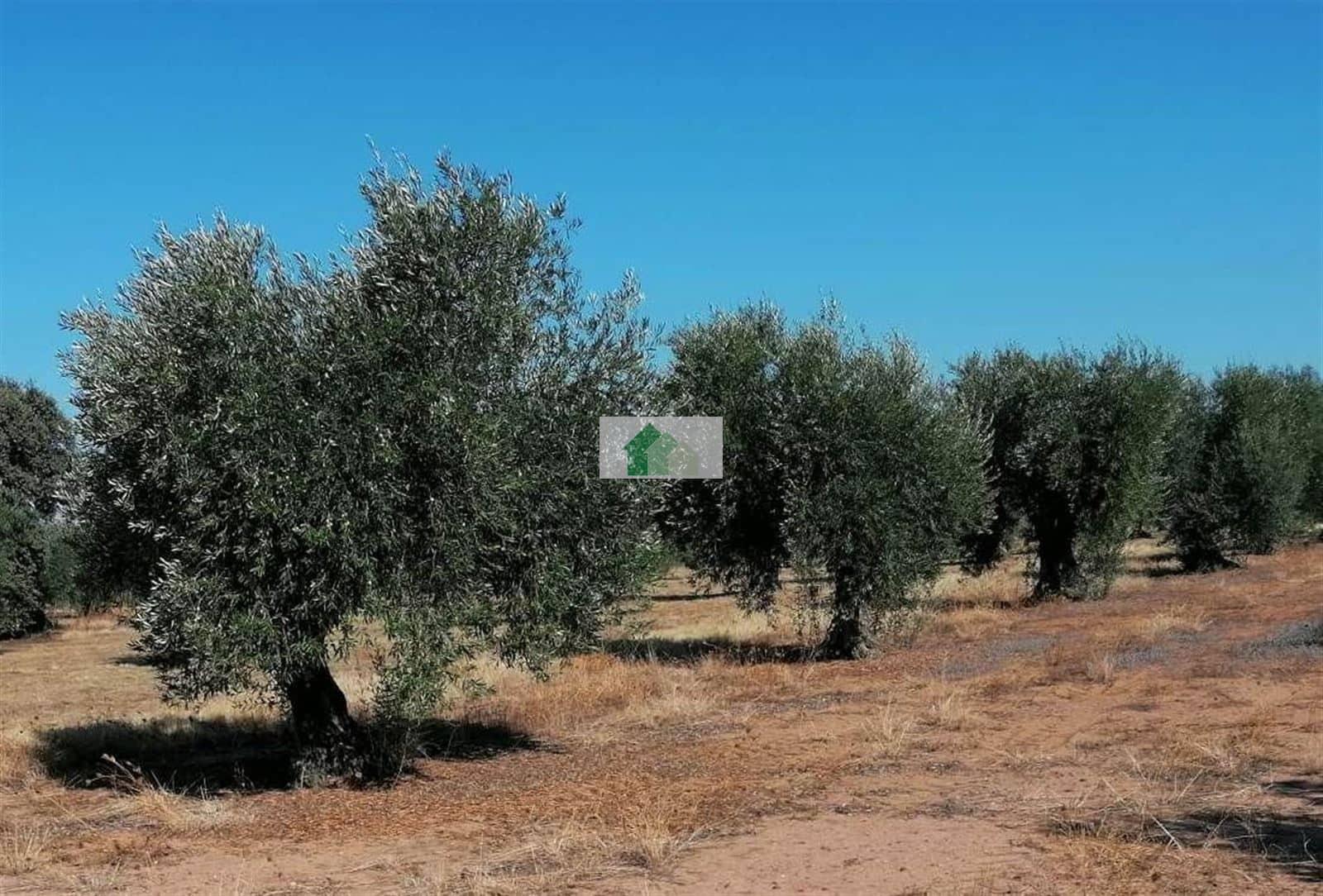 Teren niezagospodarowany na sprzedaż w Montijo - 9 500 € (Ref: 5653644)