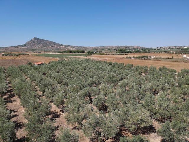 Terreno Não Urbanizado para venda em Caudete - 27 000 € (Ref: 5498551)