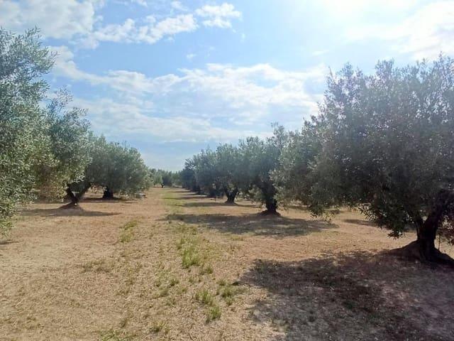 Grunde uden byggetilladelser til salg i Montesa - € 30.000 (Ref: 6203951)