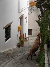 Pensión/Hostal de 7 habitaciones en Busquístar en venta - 350.000 € (Ref: 2913675)