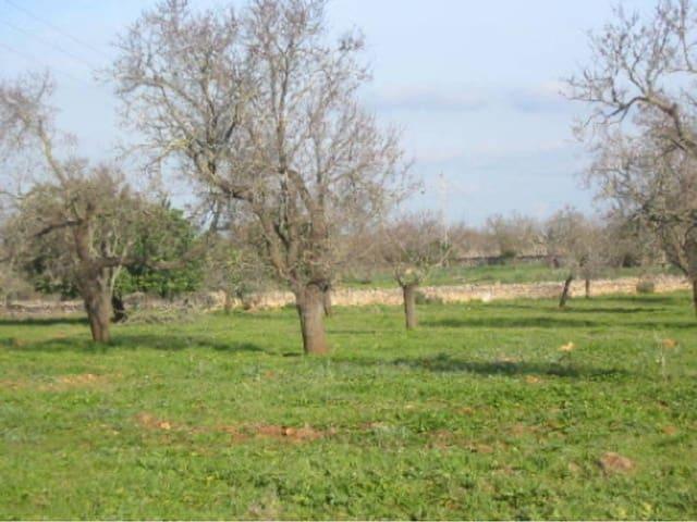 Ubebygd land til salgs i Muro - € 420 000 (Ref: 3633298)