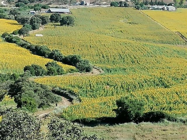 2 soverom Finca/Herregård til salgs i San Jose del Valle - € 300 000 (Ref: 5442862)