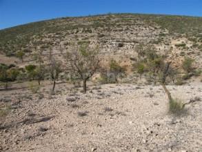 Ubebygd land til salgs i Seron - € 50 000 (Ref: 868489)
