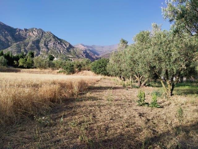 Terreno Não Urbanizado para venda em Niguelas - 35 000 € (Ref: 5424488)