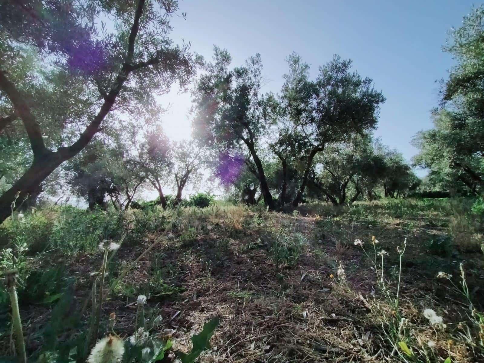 Grunde uden byggetilladelser til salg i Niguelas - € 80.000 (Ref: 5428841)