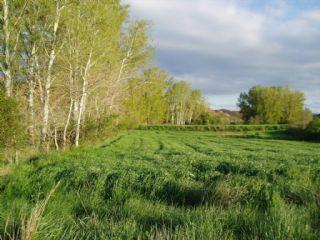 Terre non Aménagée à vendre à Arcos de Jalon - 5 000 € (Ref: 1696707)