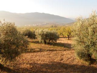 Undeveloped Land for sale in Valderrobres - € 7,000 (Ref: 2363176)