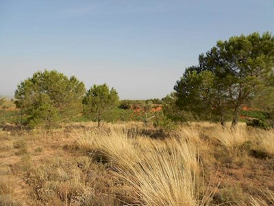 Undeveloped Land for sale in Requena - € 7,700 (Ref: 2660545)