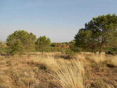 Landgrundstück zu verkaufen in Requena - 7.700 € (Ref: 2660545)