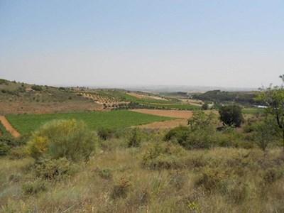 Landgrundstück zu verkaufen in Cosuenda - 5.000 € (Ref: 2660546)