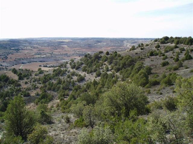 Ubebygd land til salgs i San Esteban de Gormaz - € 7 000 (Ref: 3527511)