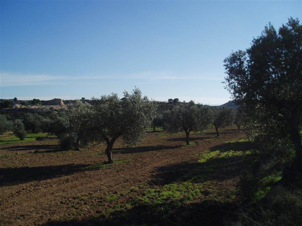 Terreno/Finca Rústica en Batea en venta - 11.000 € (Ref: 3527515)