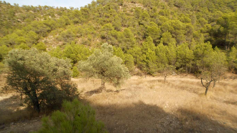 Terre non Aménagée à vendre à Mequinenza - 8 000 € (Ref: 3532828)