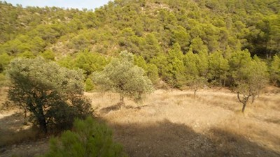 Undeveloped Land for sale in Mequinenza - € 8,000 (Ref: 3532828)