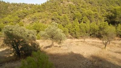 Terre non Aménagée à vendre à Mequinenza - 10 000 € (Ref: 3532828)