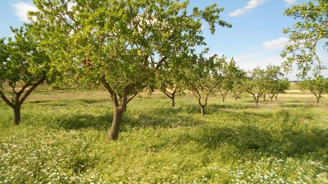 Terre non Aménagée à vendre à Nonaspe - 11 000 € (Ref: 4098004)
