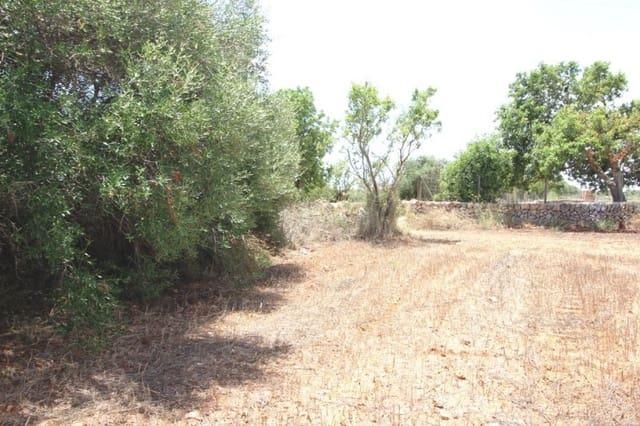 Terrain à Bâtir à vendre à Campos - 200 000 € (Ref: 3944433)