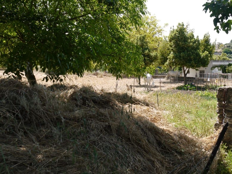 Finca/Country House for sale in Arriate with pool - € 195,000 (Ref: 2066243)