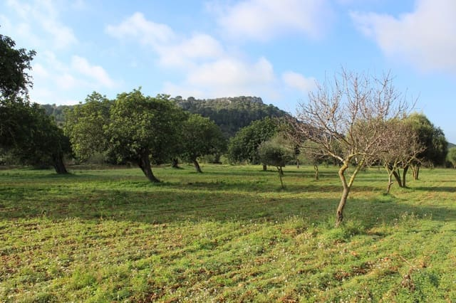 Ubebygd land til salgs i Es Carritxo / El Carritxo - € 420 000 (Ref: 4996343)