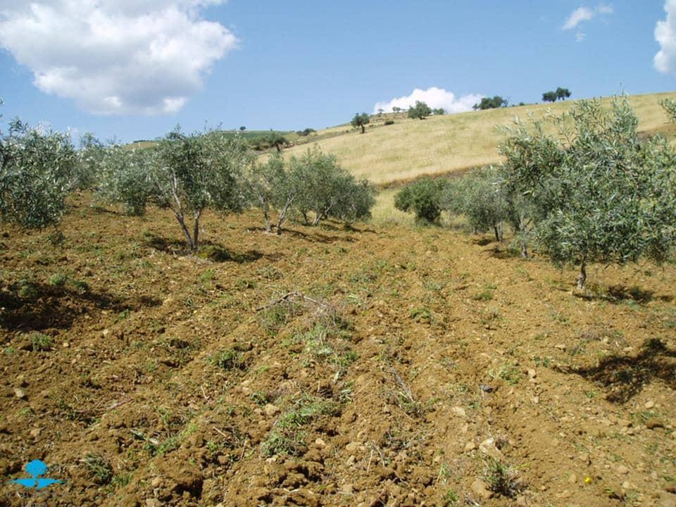 Terre non Aménagée à vendre à Coin - 82 950 € (Ref: 2797140)