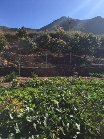 Terre non Aménagée à vendre à Buenavista del Norte - 90 000 € (Ref: 4716990)