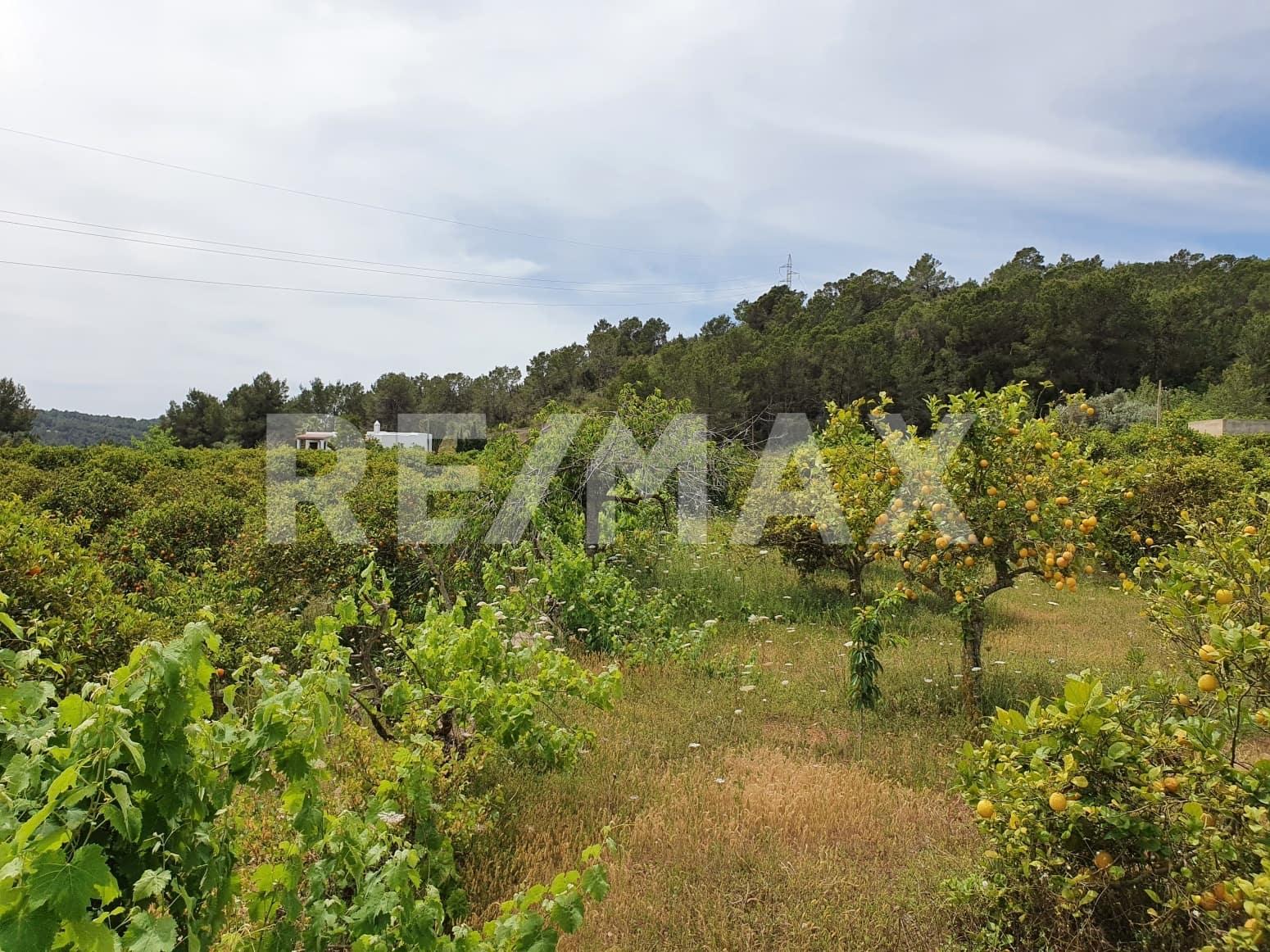 Byggetomt til salgs i Santa Gertrudis de Fruitera - € 750 000 (Ref: 5378712)